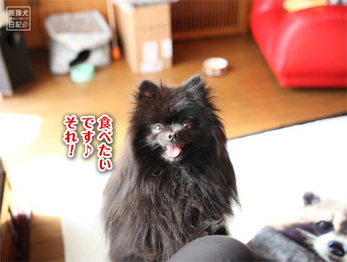 20180324_真熊3