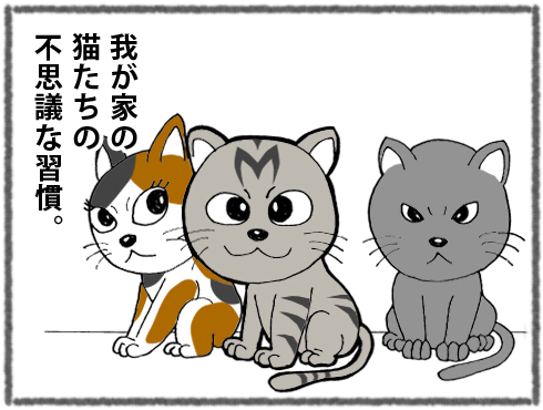 20180325_猫たち1