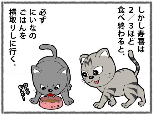 20180325_猫たち3