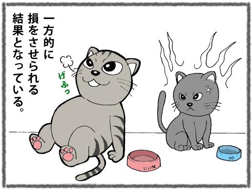 20180325_猫たち6