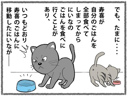 20180325_猫たち5
