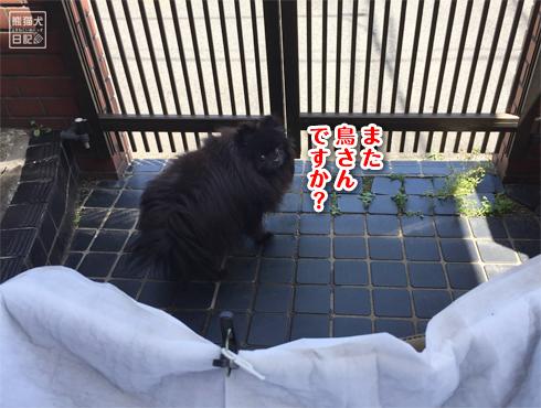 20180527_つばめ通信20