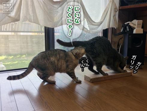 20180607_爪とぎ事件簿6