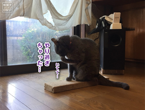 20180607_爪とぎ事件簿13