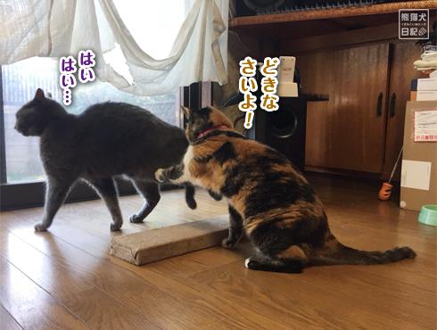 20180607_爪とぎ事件簿16