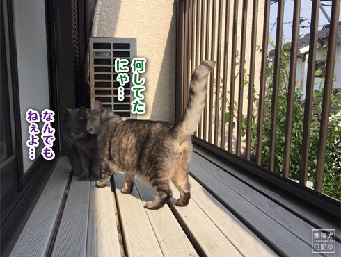 20180609_猫たち12