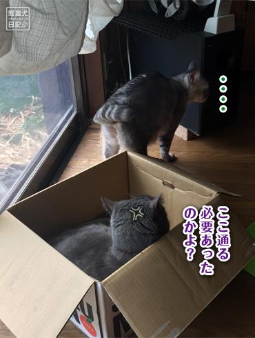 20180615_にいな&寿喜7