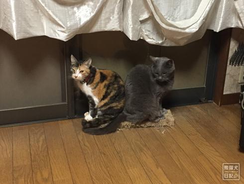 20180616_夫婦猫1