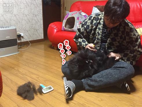 20180625_真熊ブラッシング5