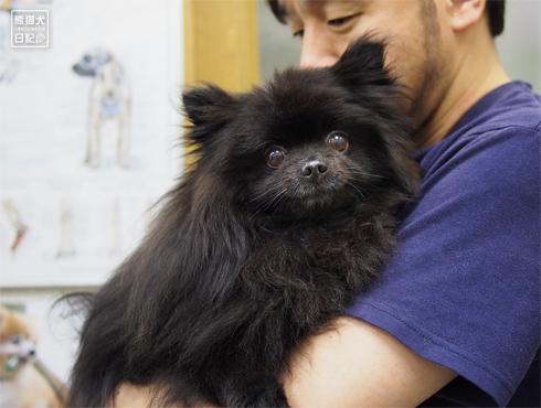 20180625_真熊ワクチン1