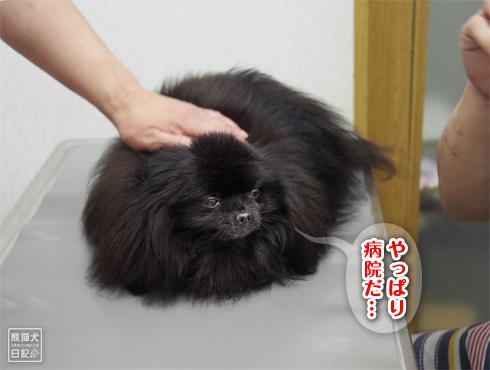20180625_真熊ワクチン2