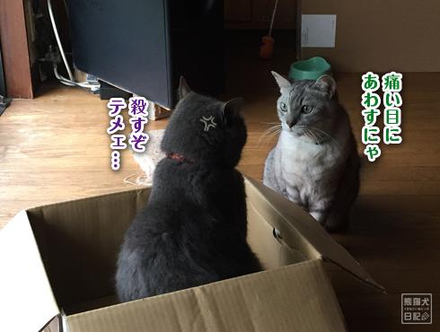 20180630_猫の争い3