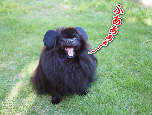 真熊、ネズミの耳が生える