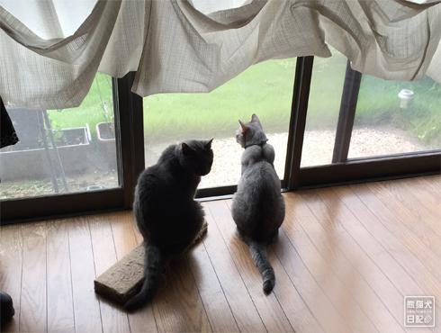 20180901_窓際の猫1