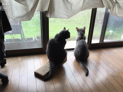 20180901_窓際の猫2