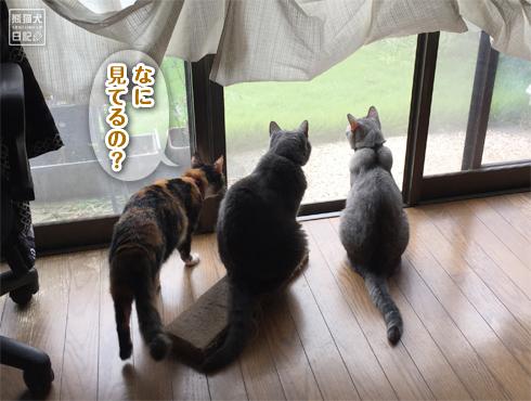 20180901_窓際の猫3