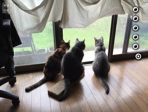 20180901_窓際の猫4