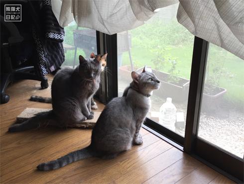 20180901_窓際の猫5