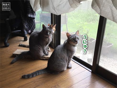 20180901_窓際の猫6