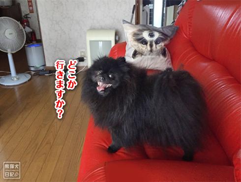 20180901_窓際の猫8