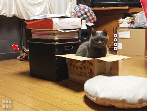 20180909_猫たち3