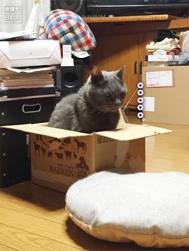 20180909_猫たち4