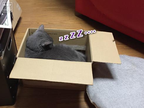 20180909_猫たち6