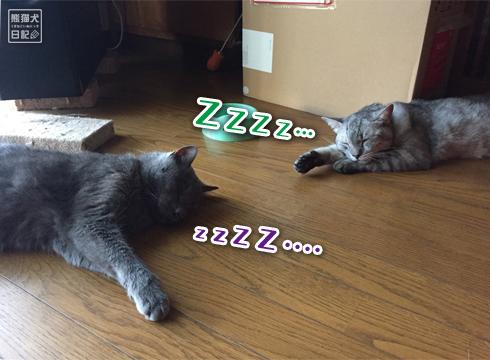 20180913_猫たち3