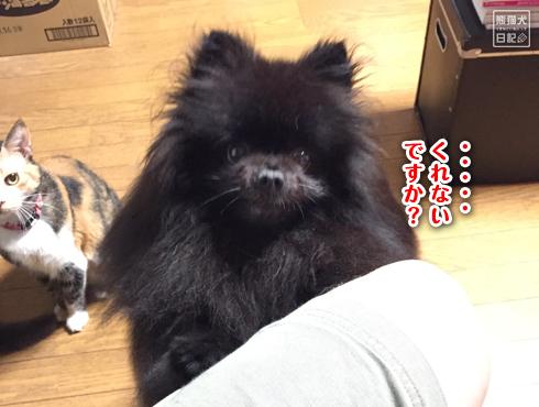 20180924_真熊おねだり6