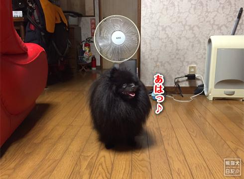 20181026_動物たち5