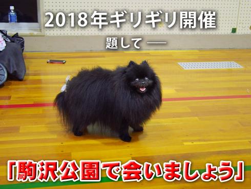 20181104_駒沢公園で会いましょう1