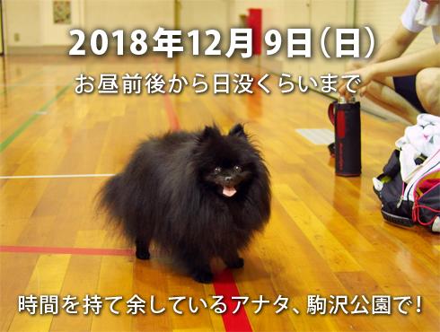20181104_駒沢公園で会いましょう3