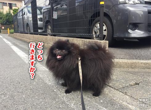 20181105_真熊2
