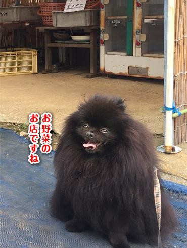 20181105_真熊6