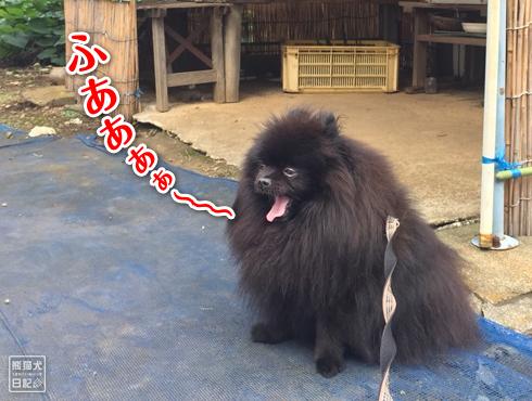 20181105_真熊7