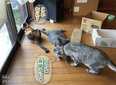 20181106_動物たち5