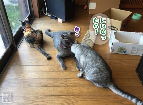 20181106_動物たち7