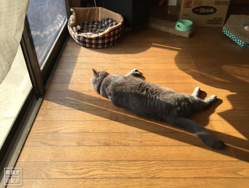 20181110_石像猫1