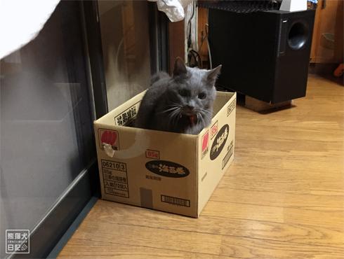 20181110_石像猫8