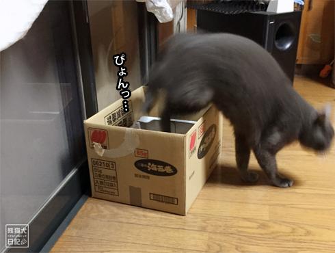 20181110_石像猫10