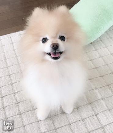 20181111_熊猫犬ファミリーの犬1