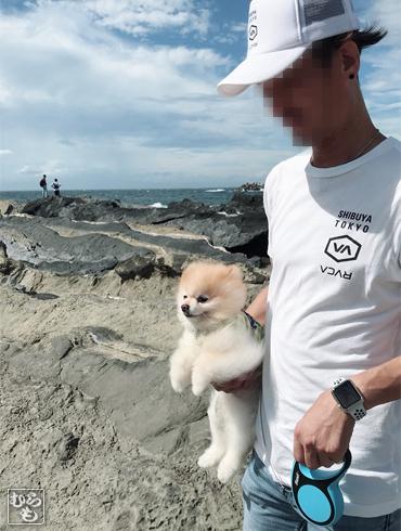 20181111_熊猫犬ファミリーの犬3