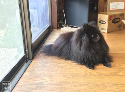 20181111_熊猫犬ファミリーの犬12