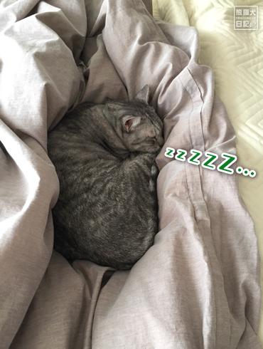 20181116_猫たち2