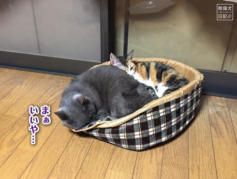 20181118_夫婦猫7