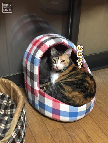 20181118_夫婦猫10