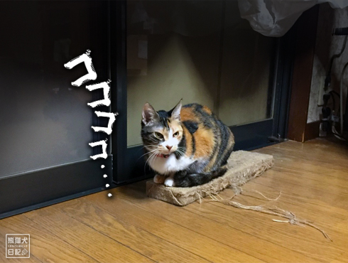 20181121_動物たち7
