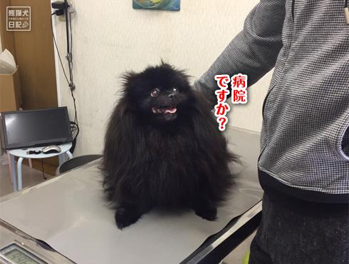 20181123_真熊2