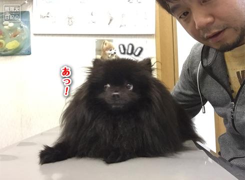 20181123_真熊7