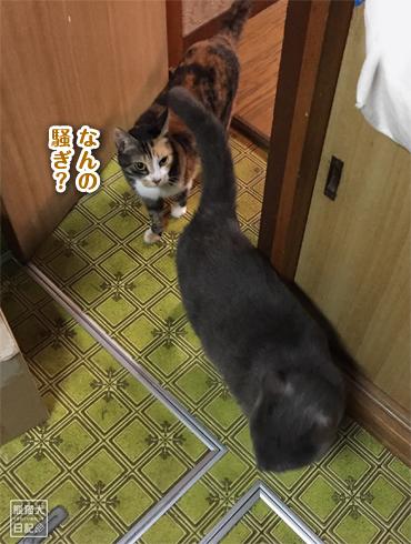 20181127_猫ごはん7